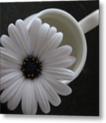 Simple White Daisy Metal Print
