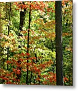 Simply Autumn Metal Print