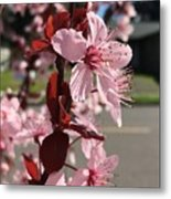 Simply Blooming  Metal Print