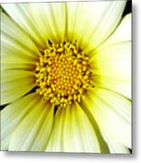 Simply Daisy Metal Print by JoAnn SkyWatcher