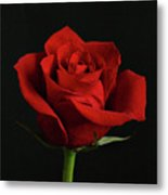 Simply Red Rose Metal Print