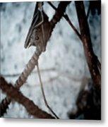 Single Bat Hanging Alone Metal Print