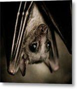 Single Bat Hanging Portrait Metal Print