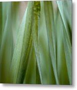 Single Blade Of Onion Grass Leaning - Color Version Metal Print
