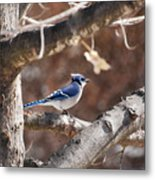 Single Blue And Available Metal Print