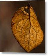 Single Fall Leaf Metal Print