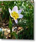 Single Flower - Simplify Series Metal Print