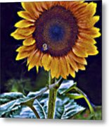 Single Flower Metal Print