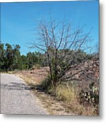 Single Lane Road In The Hill Country Metal Print