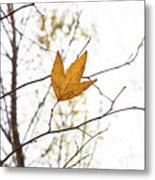 Single Leaf In Fall Metal Print