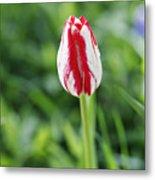 Single Lovely Tulip Metal Print