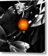 Single Orange Berry Metal Print