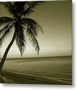 Single Palm At The Beach Metal Print