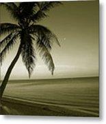 Single Palm At The Beach Metal Print