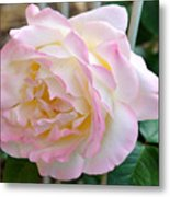 Single Peace Rose Metal Print
