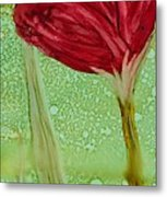 Single Poppy Metal Print