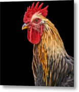 Single Rooster Metal Print