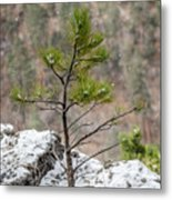 Single Snowy Pine Metal Print