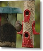 Single Songbird At Feeder Metal Print