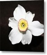 Single Spring Flower Metal Print