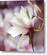 Single White Magnolia Metal Print