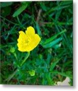 Single Yellow Buttercup Metal Print