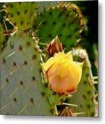 Single Yellow Cactus Bloom 050715a Metal Print