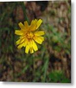 Single Yellow Flower Metal Print