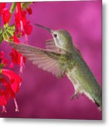 Sipping At The Salvia Metal Print