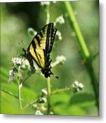 Sipping On Blackberry Blossoms Metal Print