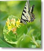 Sipping Swallowtail Metal Print