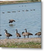 Sit Stand Or Fly Metal Print