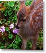 Sitka Black-tailed Fawn Metal Print