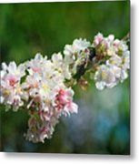 Sitting Guard In The Cherry Blossoms Metal Print