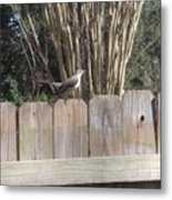 Sitting On A Fence  Metal Print