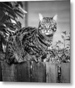 Sitting On The Fence Metal Print
