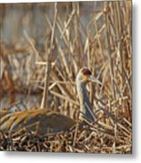 Sitting On The Nest Metal Print