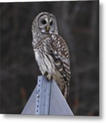Sitting On The Sign Post Metal Print