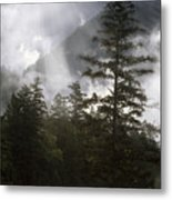 Siuslaw National Forest Metal Print