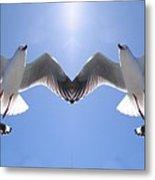 Six Heavenly Backlit Seagulls Flying Overhead In Blue Sky. Metal Print