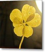 Six Leaf Clover In Studio 2 Metal Print