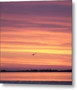Six Seagulls At Sunrise Metal Print