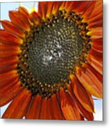 Sizzling Hot Sun Flower Metal Print