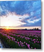 Skagit Floral Sunset Metal Print