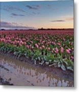 Skagit Valley Tulip Reflections Metal Print