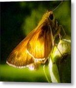 Skipper Butterfly Basking In Sun Metal Print