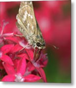Skipper Butterfly Metal Print