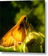 Skipper Butterfly With Sun Shine Metal Print