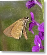 Skipper Butterly Sipping Nectar Metal Print
