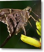 Skipper Delight Metal Print